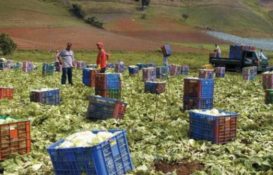 El campo dominicano con la capacidad de alimentar el país sin recurrir a las importaciones