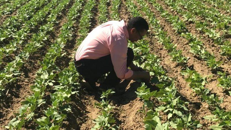COVID-19: gobierno auxiliará a sectores productores de alimentos