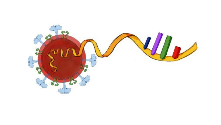 Investigadores dominicanos trabajan en la secuenciación del virus Causante del COVID-19