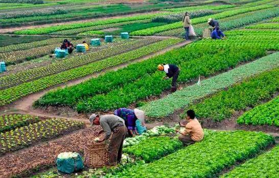 Ministerio de Agricultura brindará apoyo a productores de vegetales y hortalizas