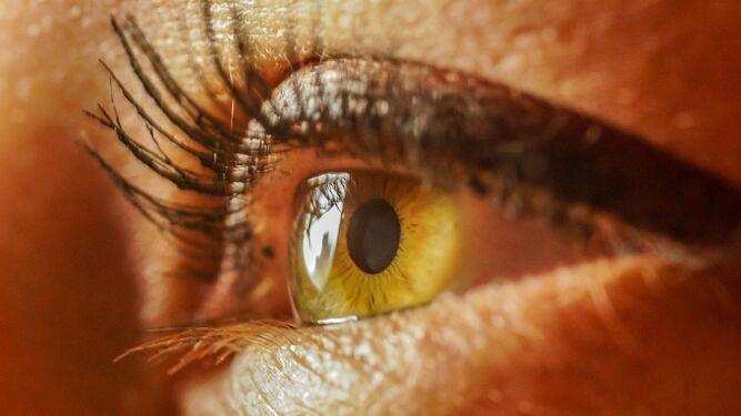 <h1>Tus ojos, una ventana al cerebro</h1>