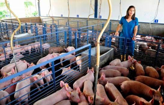 La porcicultura dominicana en tiempos de COVID-19 y con tasa cero