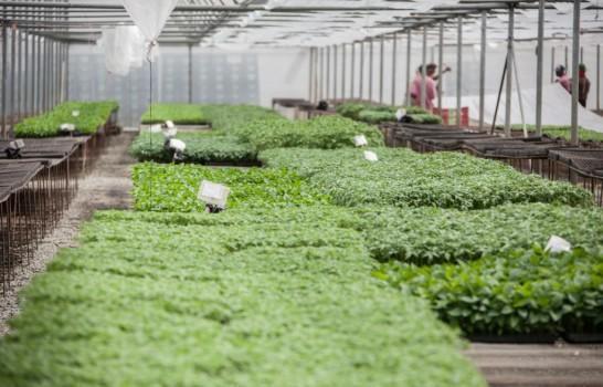 Denuncian productos agrícolas se dañan en el campo dominicano por falta de mercado