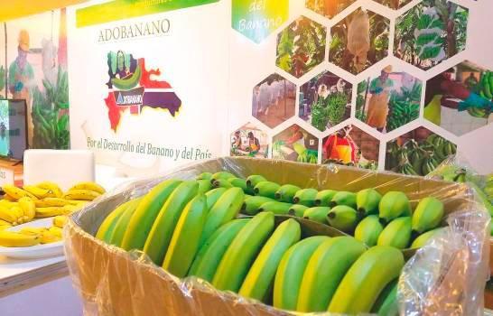 Exportaciones de banano dominicano podrían caer cerca de un 15% en los próximos días