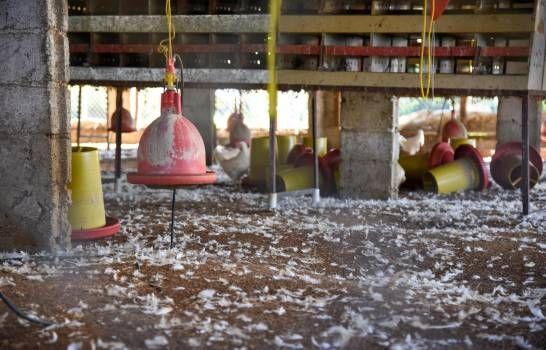 Avicultores afectados por la influenza aviar esperan por ayuda prometida